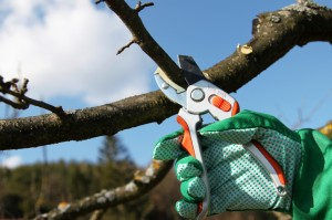 tree-pruning-300x199