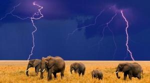 Elephant Lightning!