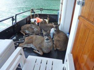 Deer.2