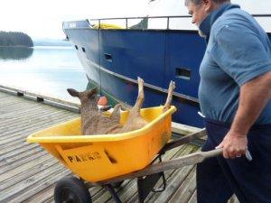 Deer.3
