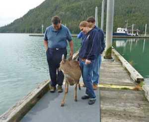 Deer.4